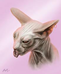 Crazy Kitten by JamesTurquoise