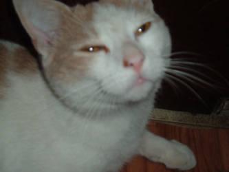 My Fat Cat Carmel by JayJayWolf