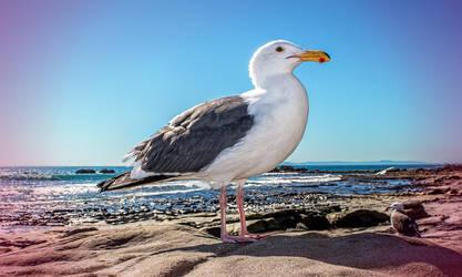 Laguna birds by KBgraphix