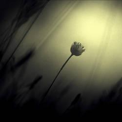 darkest dream by Piarvi-Recherreen