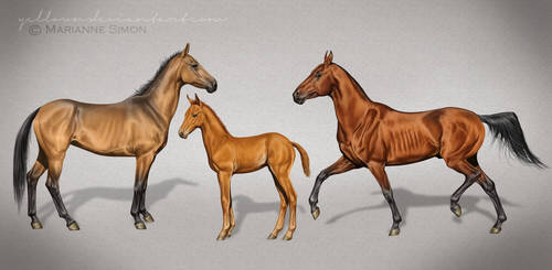 Akhal Teke - The whole family by Yellown