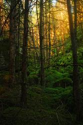 Dark woods by zompi
