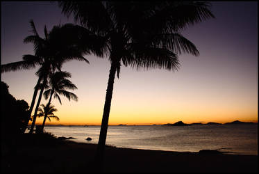 Evening palm trees by wildplaces