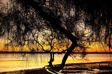 Bribie sunset through tree 1 by wildplaces