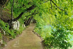 Lakeside walk 1 - Plitvicka by wildplaces