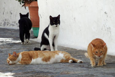 Four cats of the Apocalypse - Patmos by wildplaces