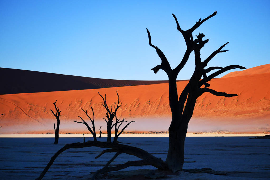 Mist in Dead Vlei, Namibia by wildplaces
