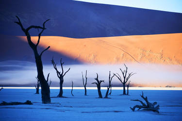 Mist in Dead Vlei 2 - Namibia by wildplaces