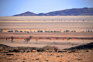 Namib landscape 3 by wildplaces