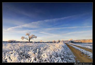 Frost Sunrise II by Shahenshah
