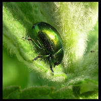 Green by Theerya