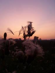 Breath of Daybreak by Foxxbuster