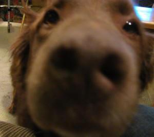 Gizmo562's Profile Picture