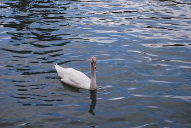 swan by josselin94