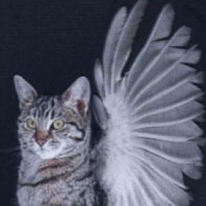 cobaltjade's Profile Picture
