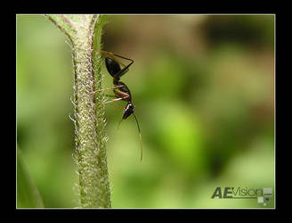 Tiny World by AEvision