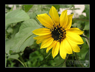 As Yellow As it Gets by AEvision