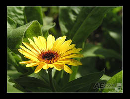 As Yellow As it Gets II by AEvision