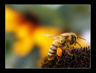 Busy Bee by AEvision