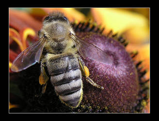 BusyBee Returns by AEvision