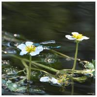 Summer Memories by IrisErelar