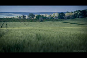 Field I by IrisErelar