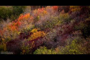 Autumn_colors by IrisErelar