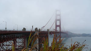 Golden Gate by LoveLiveLaugh123