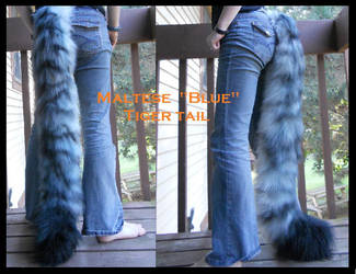 Maltese Blue tiger tail by Sharpe19