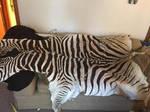 Zebra by Sharpe19