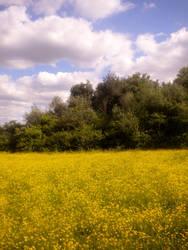 Summer Fields by NeepTheSheep