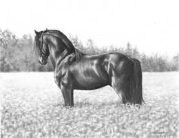 Black stallion by NillaMustikka