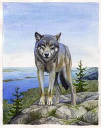 Wolf watching by NillaMustikka