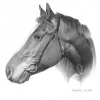 Horse portrait (3) by NillaMustikka
