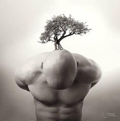 bonsai by StanOd