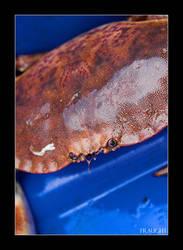 Crab by fraughtuk