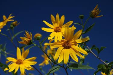 Yellow Flowers by EBenson260
