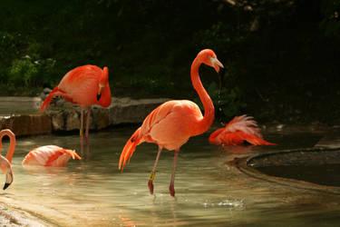 Flamingo Day Spa by EBenson260