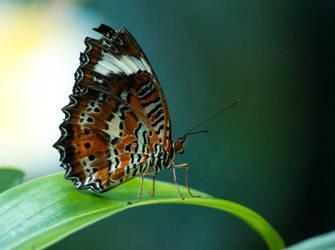 Butterfly of screams by trezoid