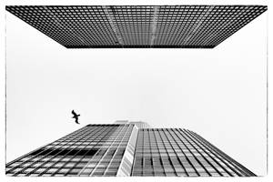 Towering Flight by Un-known-Artist