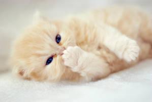 ..cat. by burcinesin
