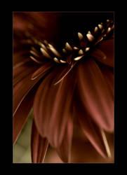 flower 1241 by sergiemag