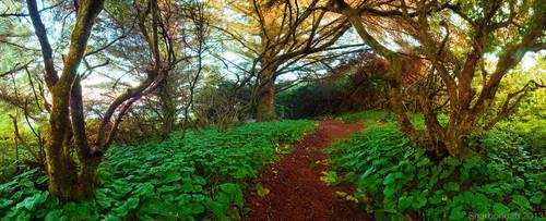 Path by Vlue