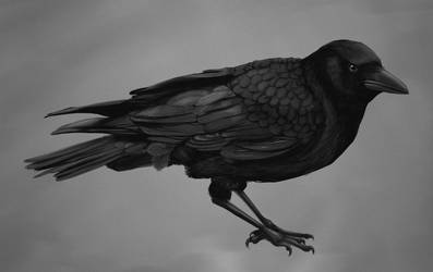 Crow study by EllaKoo