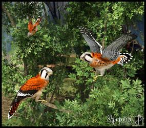 Birds Of Prey by Estroyer