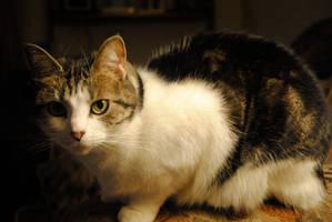 shadow cat by ApplePo3
