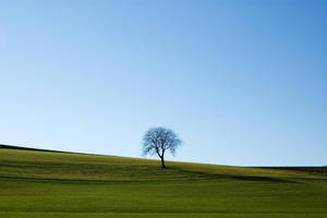 Tree... by DrFolamour