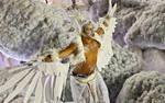 Brazil-carnival005 by WoC-Brissinge