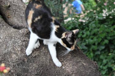 Cat Attacks 1 by Danelp