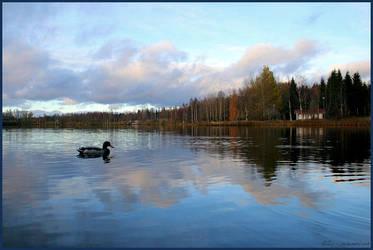 Duck pond by sz1